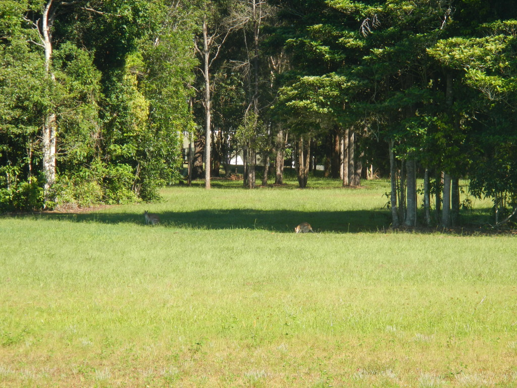 On the Wallaby Tour in Daintree National Forest in Queensland, Australia