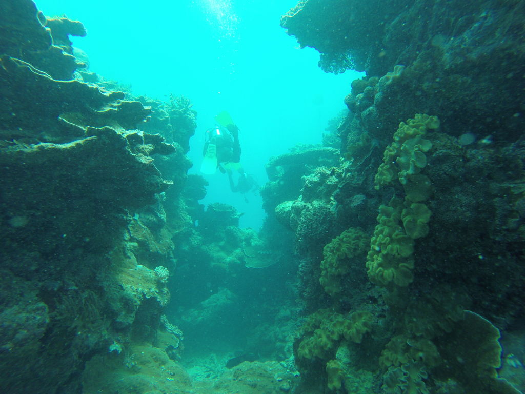 Scuba Diving in the Great Barrier Reef in Australia